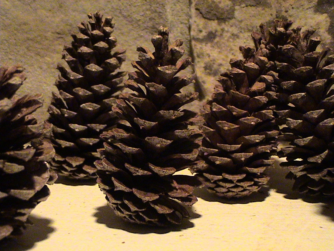 Pine Cones Symbolizes Earth and can be used for protection, diviniation and symbology